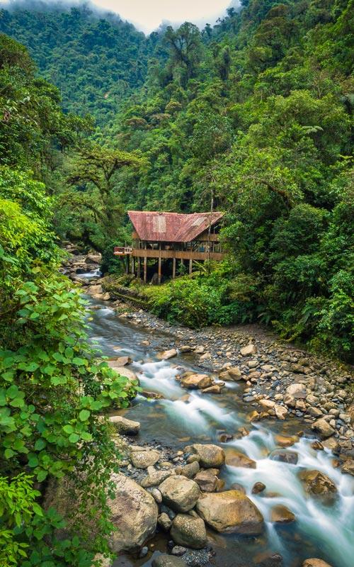 Jungle-Lodge