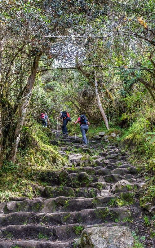 beautiful-path-on-inca-trail